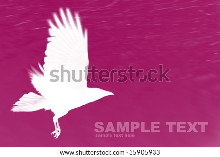 Background of abstract bird-Computational graphic
