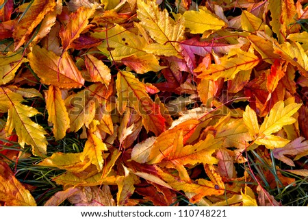 Background of autumn leaves. Abstract background. Autumn landscape.