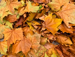 Background of autumn leaves. Abstract background. Autumn landscape. Autumn landscape.