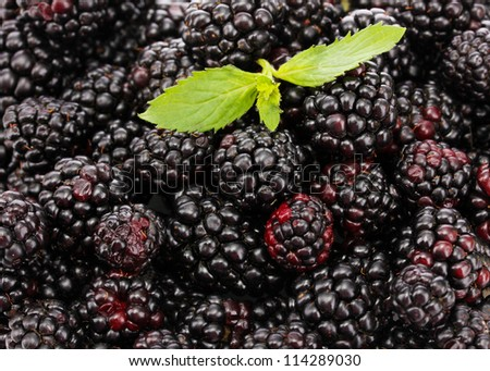 background of beautiful blackberries with leaves
