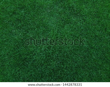 Background of beautiful dark green grass texture in the park, green law desktop wallpaper. #1442878331