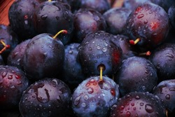 background of beautiful home plums