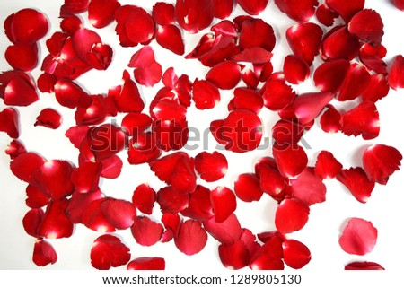 Background of beautiful red rose petals - Image #1289805130
