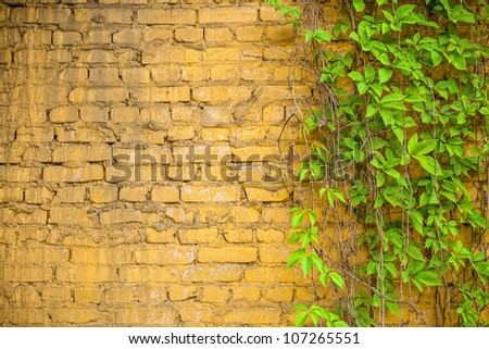 Background of brick wall texture and grape-vine