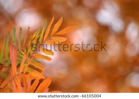 Background of bright multi- colored autumn leaves