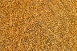 Background of Close up of ground. Texture of straw.