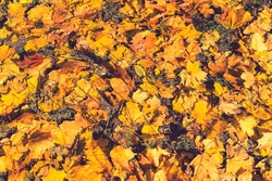 Background of colorful autumn leaves on forest floor Seamless tree bark background. Brown tileable texture of the old tree. Squirrel runs through the forest macro. toned