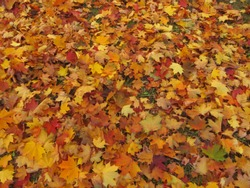Background of colorful leaves