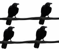 Background of crows over a black cable.