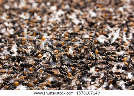 Background of dead flies. Many dead flies lie on a white surface