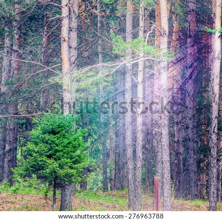 background of deep green forest with bright sunshine ray through the tree, square orientation