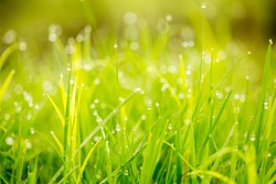 Background of dew drops on bright green grass