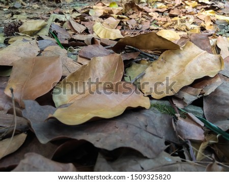 background of dry leaves above ground with selective focus and soft blurred effect.  creative concept. Stock fotó ©