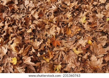 Background of dry leaves. / Dry leaf on ground. / Autumn background.
