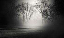 Background of empty street at night. Asphalt, autumn trees, moon, fog, smoke