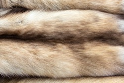 Background of expensive luxury soft fur pelts of the Russian Barguzin sable, of different shades of brown