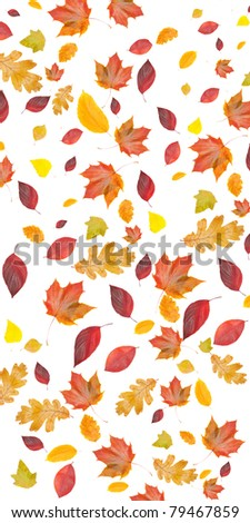 background of fall leaves, isolated on white background