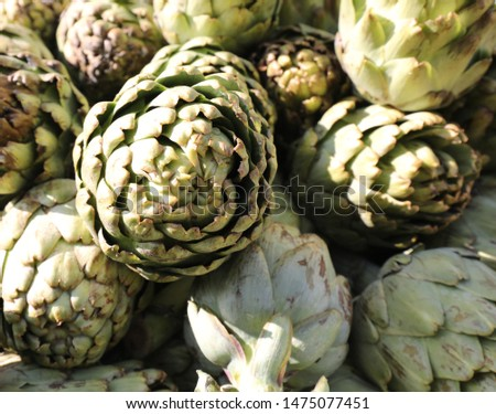 background of fresh artichokes freshly picked for sale at the greengrocer #1475077451