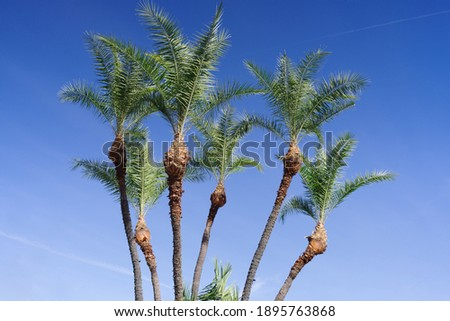 Background of freshly pruned palm trees. Foto stock ©