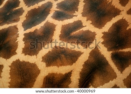 Background of giraffe skin pattern macro view in golden brown