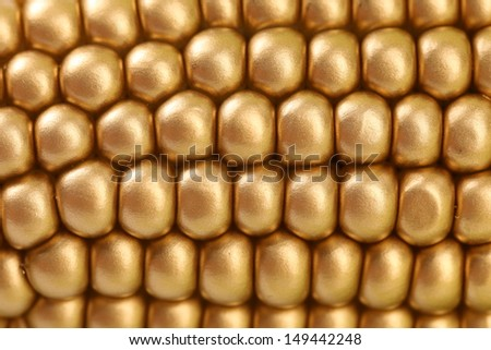 Background of golden indian corn. Close up.