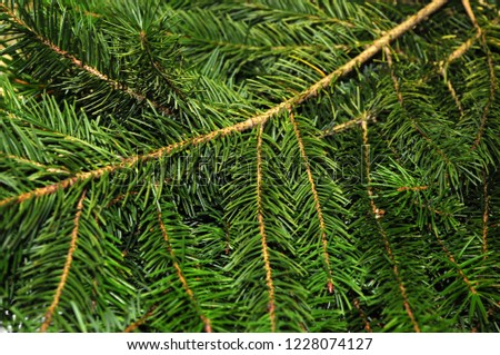 Background of green branches of fir tree. Fir-tree. Spruce. New Year theme. #1228074127