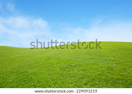 background of green field with blue sky #229093219