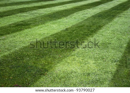 Background of green lawn with stripes