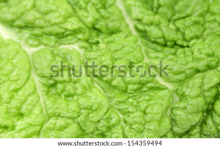 Background of green leaf chinese cabbage.