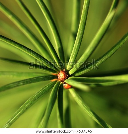 Background of green young coniferous twig