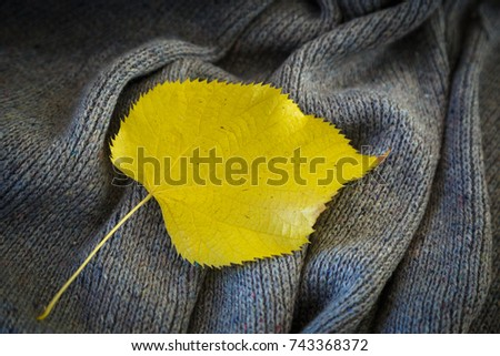 background of knitted gray linen of goat's wool made with knitting needles or on a knitting machine laid in big waves with  yellow aspen leaf #743368372