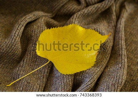 background of knitted gray linen of goat's wool made with knitting needles or on a knitting machine laid in big waves with  yellow aspen leaf #743368393