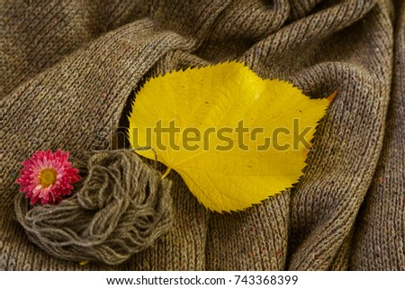 background of knitted gray linen of goat's wool made with knitting needles or on a knitting machine laid in big waves with  yellow aspen leaf and red chrysanthemum flower. #743368399