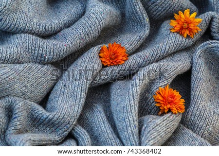 background of knitted gray linen of goat's wool made with knitting needles or on a knitting machine laid in waves with  orange  chrysanthemum flower. #743368402