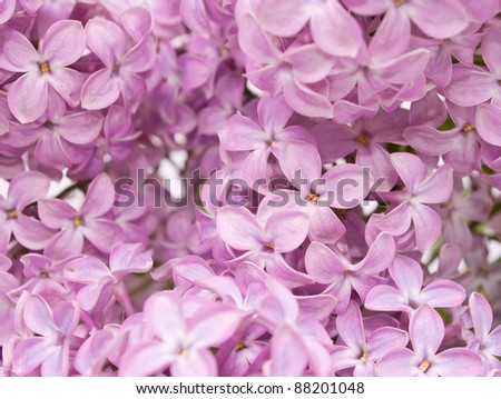 background of lilac