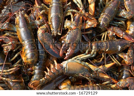 Background of live lobsters at seafood market
