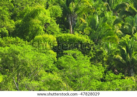 Background of lush tropical jungle at Pacific coast of Mexico