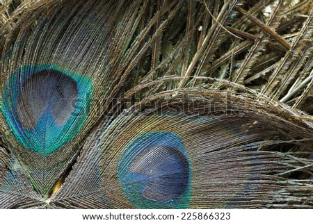 background of old peacock feathers texture #225866323
