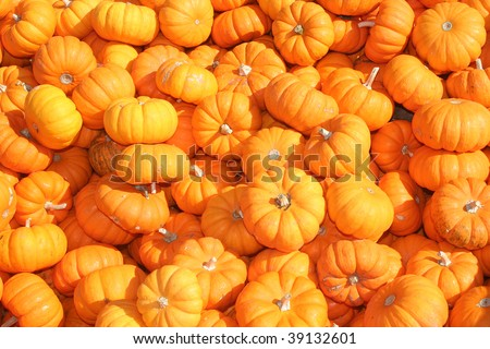 Background of orange miniature pumpkins