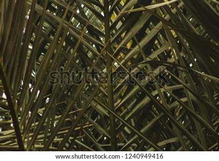 background of palm fronds and leaves   #1240949416