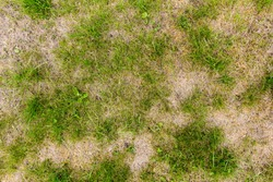 Background of patchy grass with weeds