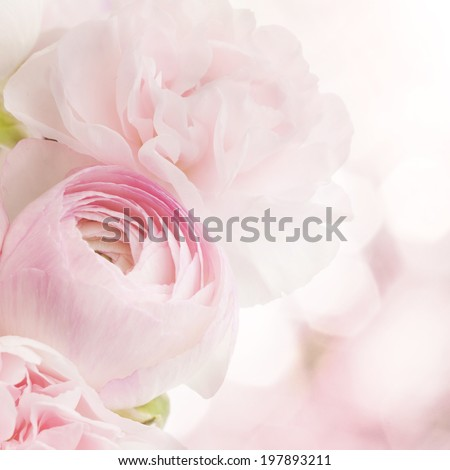 background of pink flowers