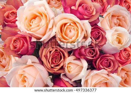 Background of pink orange and peach roses #497336377