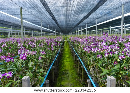 Background of plentiful orchid farm