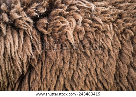 Background of raw wool or sheep skin, Thailand
