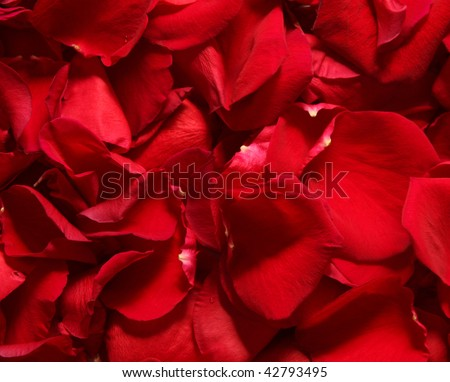 Background of red rose petals. Close-up.