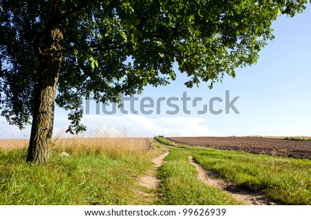 Background of rural gravel road between agricultural fields and oak tree branches.