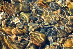 Background of shiny pebbles on the river bottom. Abstract pattern of pebbles under the surface of the water.