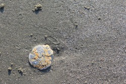Background of single shell on the damp sand