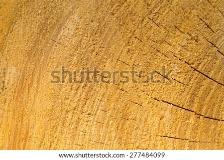 Background of sliced tree trunk. Close up of tree trunk section.